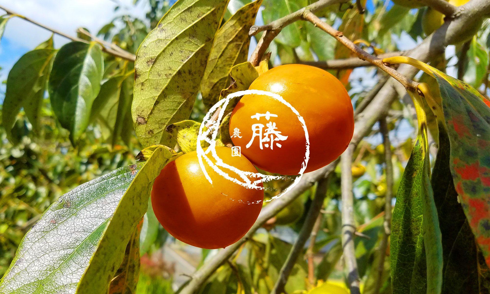 干し柿・熊本 御船町の「藤農園」